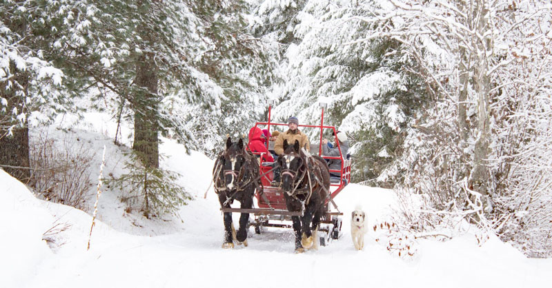 Western-Pleasure-Sleigh-Ride-Snow-2