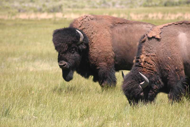 Zapata-Bison-dude-ranches-ecotourism